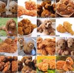 dog-or-friedchicken-results