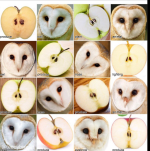 owl-or-apple-results