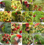 parrot-results