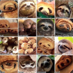 sloth-or-croissant-results